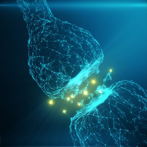 Jagust and Mormino say new approach to imaging brain synapses could help with diagnosing and treating AD